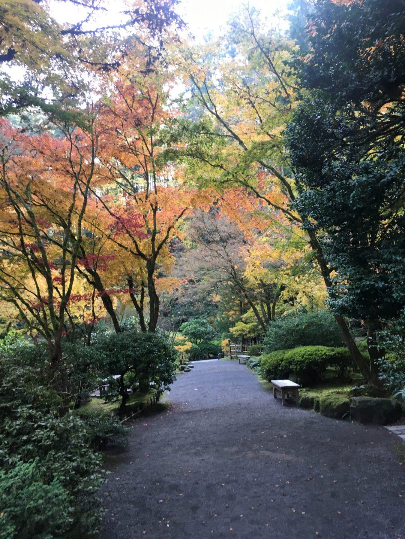 Portland Japanese Garden November 2019